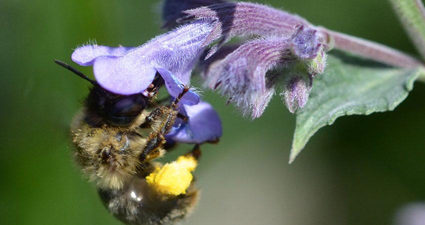 Bienenschutz in Oberaudorf